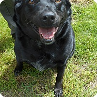 Adopt A Pet :: Maggie - Jackson, NJ