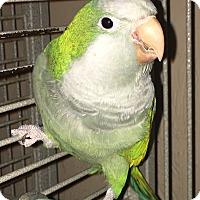 Adopt A Pet :: Tabago - Punta Gorda, FL