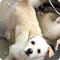 Adopt A Pet :: casey - loves kids! - Phoenix, AZ