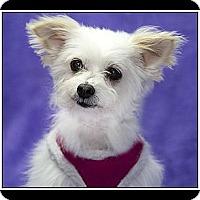 Adopt A Pet :: Darcy - Ft. Bragg, CA