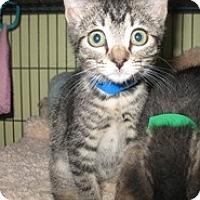 Adopt A Pet :: Meico - Shelton, WA