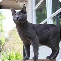 Adopt A Pet :: Gordon - Naples, FL