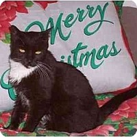 Adopt A Pet :: Jewels - Fort Lauderdale, FL