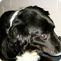 Adopt A Pet :: Elwood - Erwin, TN