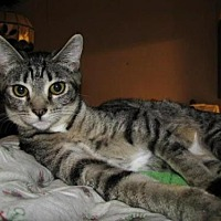 Adopt A Pet :: Marcy - Salem, OR
