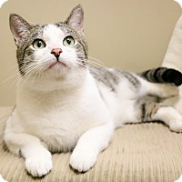 Adopt A Pet :: Perry - Chicago, IL