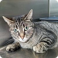 Adopt A Pet :: Meena - Elyria, OH