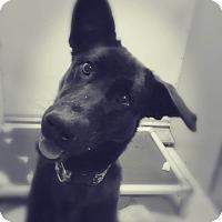 Adopt A Pet :: Jade - Saranac Lake, NY