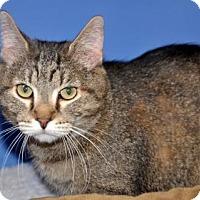 Adopt A Pet :: Jerry - Northbrook, IL