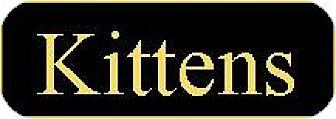 Domestic Shorthair Kitten for adoption in Pittsburg, California - KITTENS!!!