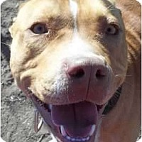 Adopt A Pet :: Diesel - Arenas Valley, NM
