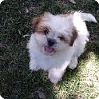 Adopt A Pet :: ANDIE - Mission Viejo, CA