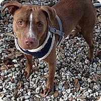 Adopt A Pet :: Lily - Naples, FL