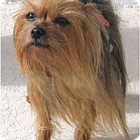 Adopt A Pet :: Penny - Hardy, VA