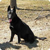 Adopt A Pet :: Onyx - Rigaud, QC