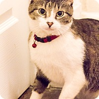Adopt A Pet :: Griffin - Chicago, IL