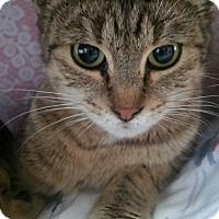 Adopt A Pet :: Sparkle - Witter, AR