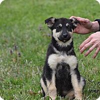 Adopt A Pet :: Purty - Groton, MA