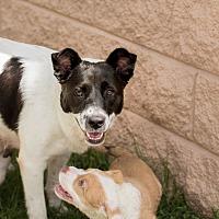 Adopt A Pet :: Shelly - Myakka City, FL