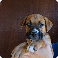 Adopt A Pet :: Rose - Oviedo, FL