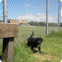 Adopt A Pet :: Saffire - Terrell, TX