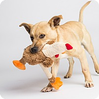 Adopt A Pet :: Jessie James - Ogden, UT