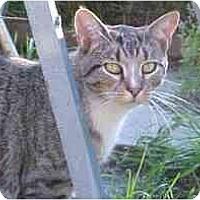 Adopt A Pet :: Jimmie #1 - Lunenburg, MA