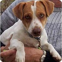 Adopt A Pet :: BUSTER BROWN - Phoenix, AZ