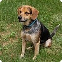 Adopt A Pet :: Blarney - Homewood, AL
