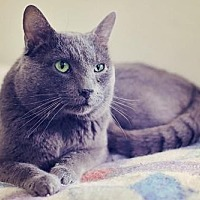 Adopt A Pet :: Dusty - Markham, ON