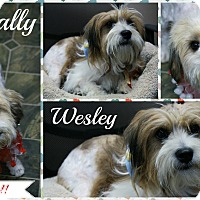 Adopt A Pet :: Wally & Wesley - Rockwall, TX