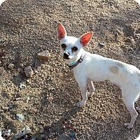 Adopt A Pet :: Fleetwood - Scottsdale, AZ