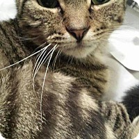 Adopt A Pet :: Mister - Queensbury, NY