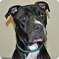 Adopt A Pet :: Yukon - Port Washington, NY