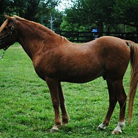 Pony - Other Mix for adoption in Lovettsville, Virginia - Tucker
