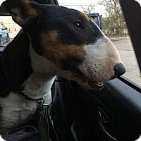 Adopt A Pet :: Cashew - Houston, TX