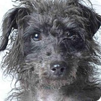 Adopt A Pet :: CAMILA - Ukiah, CA