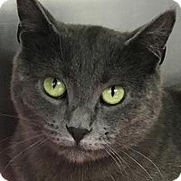 Adopt A Pet :: Greta: Social Project - Clayville, RI