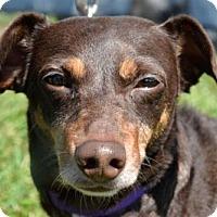 Adopt A Pet :: WINSTON - West Palm Beach, FL