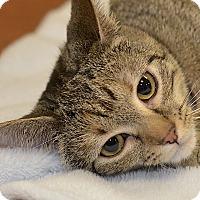 Adopt A Pet :: Honey - Medina, OH