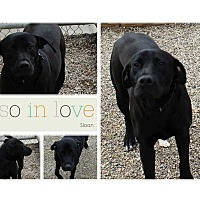 Adopt A Pet :: Sloan - Clear Lake, IA