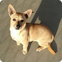 Adopt A Pet :: Ginger - Parkton, NC