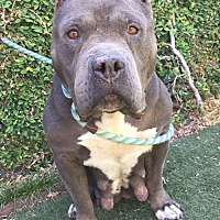 Adopt A Pet :: Marigold - West Los Angeles, CA