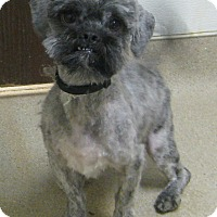 Adopt A Pet :: Oreo - Gary, IN