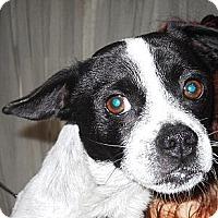 Adopt A Pet :: DAPPER - Hollywood, FL