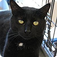 Adopt A Pet :: Frank - Santa Monica, CA