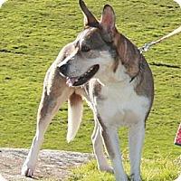 Adopt A Pet :: Buddy - Hayward, CA
