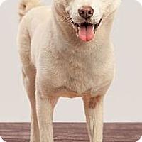Adopt A Pet :: Jasmine - West New York, NJ