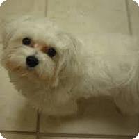 Adopt A Pet :: HARLEY - ROCKMART, GA