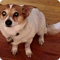 Adopt A Pet :: Tulip - Orlando, FL